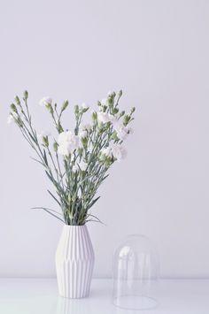 VALKOINEN KARUSELLI Carnations