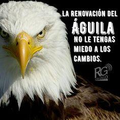 La renovación del Águila; No le tengas miedo a los cambios y avanza con fuerza y voluntad! #motivación #motivate #vida #valor #autoestima #frases #marketingdigital #fuerza #lucha #voluntad #crecimientopersonal #familia
