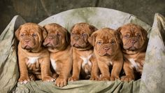 Energetic and rambunctious puppies can be a real challenge to photograph. Here are 8 tips that will help you get great shots amid the chaos!