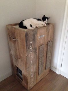 Cathouse with just about everything, scratching pads, litter box, and sleeping loft.