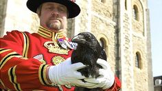BBC News - Tower of London's Jubilee raven released