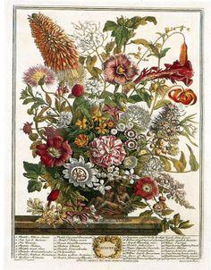 Florista Imaginária
