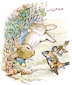 """'The Tale of Peter Rabbit', 1902 -- Beatrix Potter. """"Peter gave himself up for lost, and shed big tears; but his sobs were overheard by some friendly sparrows, who flew to him in great excitement, and implored him to exert himself. Beatrix Potter Illustrations, Beatrice Potter, Peter Rabbit And Friends, Benjamin Bunny, Bunny Art, Jolie Photo, Children's Book Illustration, Fairy Tales, Cute Animals"""
