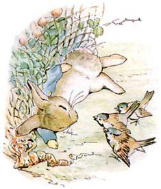 Mr. Rabbit Beatrix Potter - Pesquisa Google