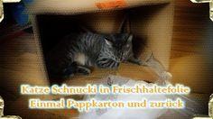 Katze Schnucki in Frischhaltefolie - Einmal Pappkarton und zurück