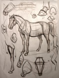 "Animal Art and Demos: February 2012 ""Visit our art shop here . Free and fast delivery - an # art drawing # animal . Anatomy Sketches, Anatomy Drawing, Drawing Sketches, Sketching, Horse Drawings, Animal Drawings, Art Drawings, Dessin My Little Pony, Horse Anatomy"
