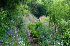 Bluebell Woods, Guernsey.