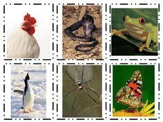 oviparous and nonoviparous animal sort.pdf