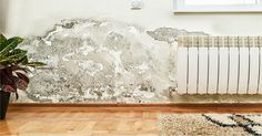 """Mold illness may be the most prominent health problem physicians are missing today — a """"hidden"""" pandemic that's sweeping the nation."""
