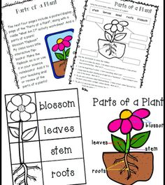 photsynthesis worksheets Free worksheets and reading comprehensions to understand photosynthesis plants perform photosynthesis, using energy from the sun to make their own food and so provide food for animals.