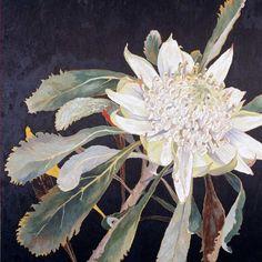 Gallery – Cressida Campbell