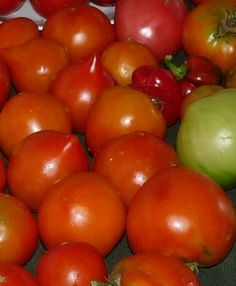 Harvesting tomatoes: at last, it's time to enjoy the fruit of your labor!