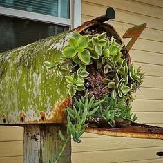Hm. Caption needed. #succulents #mailbox #gardenwhimsy
