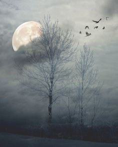 Wild geese that fly with the moon on their wings...