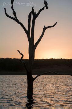 Bjelke Petersen Dam, Kingaroy, Australia
