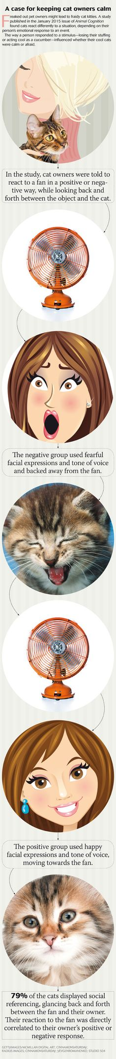 quick cat stat calm cat owners for calmer cats