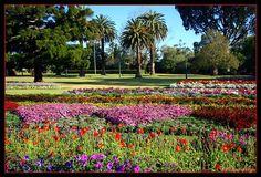 toowoomba australia   Toowoomba flower festival, a photo from Queensland, East   TrekEarth