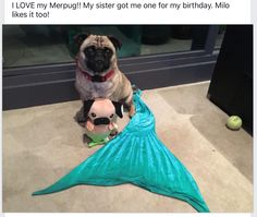 Merpug and Milo hanging out :) Super cute photo a customer posted to my Facebook page!