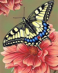 Yellow Swallowtail Butterfly Poster Print by Marilyn Barkhouse x Yellow Butterfly Tattoo, Butterfly Drawing, Butterfly Painting, Butterfly Flowers, Monarch Butterfly, Beautiful Butterflies, Flower Art, Simple Butterfly, Butterfly Pictures