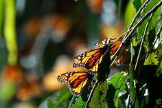Clinging by Ted Cabeen, via Flickr #goleta
