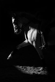 Modeling  The Angle of the light creates highlights and shadows on the horse emphasizing the features