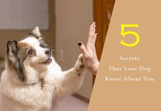 """""""Top 5 Secrets That Your Dog Know About You""""   #CoffeePuppy http://snip.ly/c607m"""