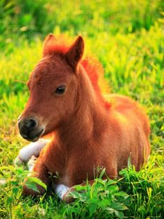 awww, a little baby horse! or as we call   them (all horses) PONIES!