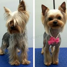 -repinned- Before & after grooming photos