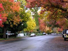 Fall in Sacramento,  the city of trees.