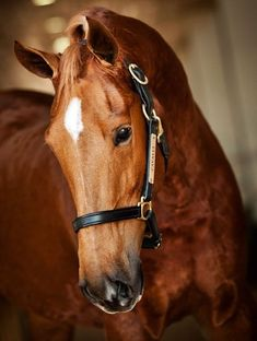 I want a halter for my horses like that on how its engraved with their name on it