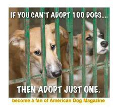 Adopt..save a life!