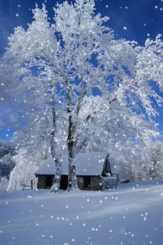 Falling snow on a tree and a hut - Google+