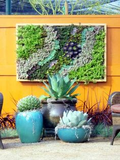 Framed wall garden...beautiful!! Great indoors or outdoors