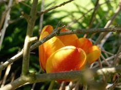 Hidden orange tulip garden scene