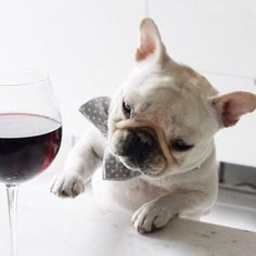 PetsLady's Pick: Adorable National Drink Wine Day Dog Of The Day...see more at PetsLady.com -The FUN site for Animal Lovers