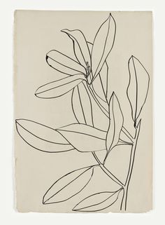 """Ellsworth Kelly Casts His Cold Eye on Art Market, Peers """"Leaves, Ile St. Louis"""" by Ellsworth Kelly. The artist collects drawings by greats such as Matisse and Picasso. Ellsworth Kelly, Botanical Illustration, Illustration Art, Illustrations, Botanical Line Drawing, Plant Drawing, Painting & Drawing, Drawing Flowers, Flower Drawings"""