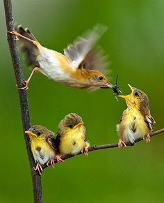 making dinner stretch...wow that looks like a wasp she is feeding that baby!!  the other babies look sad.