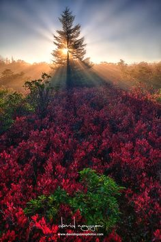 Sunray from God by David Nguyen on 500px