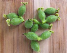 Сируп од млади зелени ореви и мед - природен резервоар на јод и витамин Ц