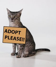 The month of June is Adopt a Shelter Cat Month. Since the month is coming to a close, it's time to get on it! If you've been looking for a pet and don't want to shell out the big bucks for a high-class breed, the best way to get your kitty is adopting one