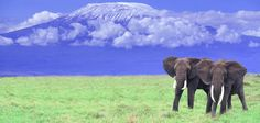 """Kilimanjaro.  """"A trek up the world's tallest freestanding mountain takes you through five different ecosystems and offers a stunning 19,340-foot view."""""""