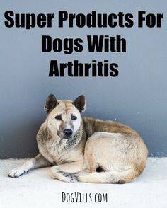 Soothe your pooch's aching bones and joints with these best products for dogs…