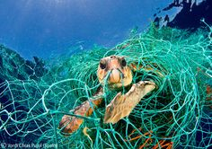 """2010: One Earth Award - Winner: Jordi Chias (Spain) -""""Turtle in trouble"""" 'I felt as though it were looking at me for help as it tried to bite through the netting.' Jordi released it, allowing one individual a second chance. Given that all species of sea turtles are endangered, they need all the help they can get."""