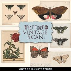 Far Far Hill - Free database of digital illustrations and papers: Freebies Kit - Vintage Illustrations of Butterflie... Easter Illustration, Retro Illustration, Digital Illustration, Vintage Illustrations, Digital Paper Freebie, Digital Scrapbooking Freebies, Digital Scrapbook Paper, Infinity Card, Printable Paper