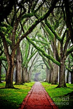 ✯ Tree-Lined