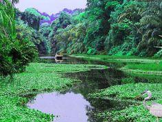 Parque Nacional Tortuguero es un Parque Nacional en la provincia de Limón de Costa Rica . Esta en el Área de Conservación Tortuguero de la parte noreste del país . Usted puede ver las tortugas marinas en el agua.