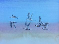 Tern in flight by Paul Webb Bird Paintings, Snowdonia, Bird Drawings, Painting & Drawing, Journey, Animals, Art, Paintings Of Birds, Art Background