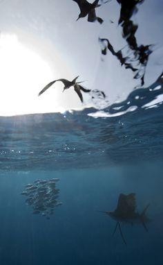 Dustin's big catch!  Sailfish in Key West