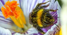 Protect Our Precious Pollinators!