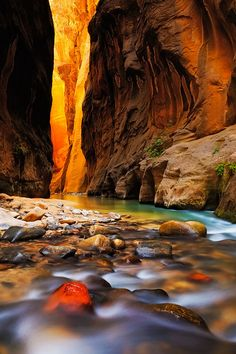 The Narrows - Zion National Park, Utah The inner canyon glow of the Zion Narrows as the Virgin River flows by in silk ribbons by Brandon Ku - via Pars Kutay The Narrows Zion, Narrows Zion National Park, National Parks, The Places Youll Go, Places To Go, Reserva Natural, Journey, Photos Voyages, Parcs